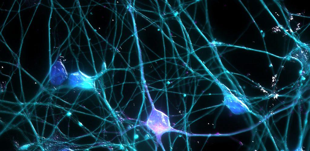 Neurogenesi cosa fare per generare i neuroni anche da adulti