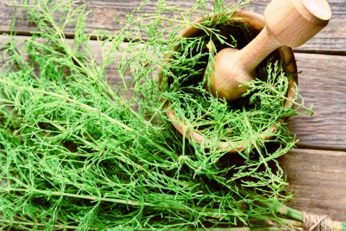 Equiseto proprietà benefiche della pianta officinale